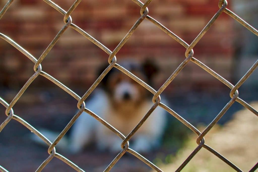 dog bite safety